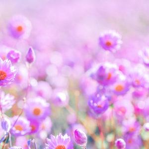 Violet Fields by De-Anne Strange