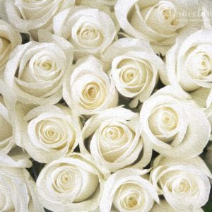Bed of White Roses