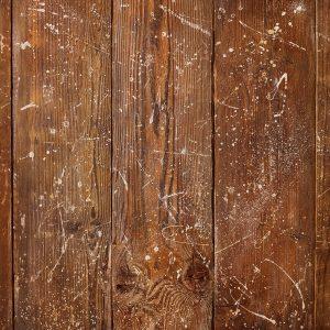Cedar by Luisa Dunn
