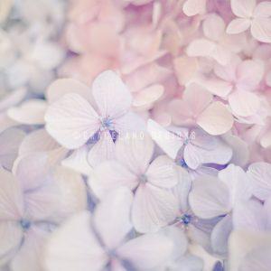 Pastel Perfect by De-Anne Strange